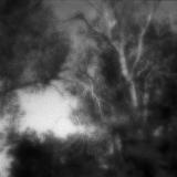 Mystical Woods